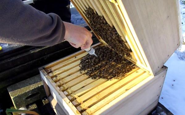 töten bienen im winter die dronen